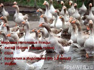 Мировое поголовье птицы: Мировое поголовье птицы: Китай (более 5 млрд голов) США