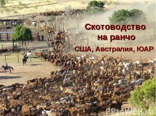 Скотоводство на ранчо