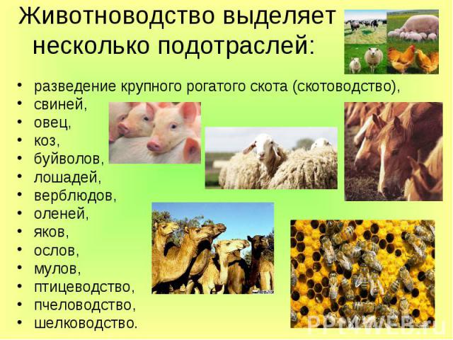 Животноводство выделяет несколько подотраслей: разведение крупного рогатого скота (скотоводство), свиней, овец, коз, буйволов, лошадей, верблюдов, оленей, яков, ослов, мулов, птицеводство, пчеловодство, шелководство.