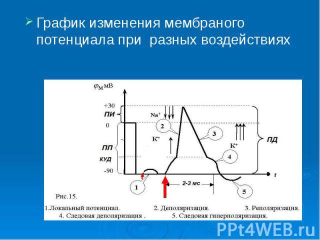 График изменения мембраного потенциала при разных воздействиях График изменения мембраного потенциала при разных воздействиях