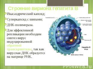 Строение вириона гепатита В Икасаэдрический капсид; Суперкапсид с шипами; ДНК-по