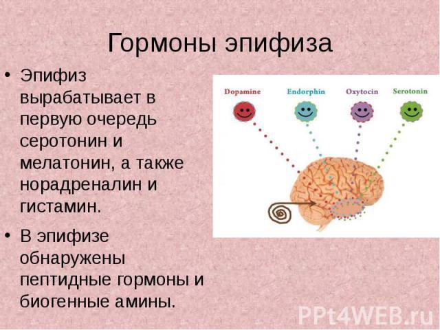 Гормоны эпифиза Эпифиз вырабатывает в первую очередь серотонин и мелатонин, а также норадреналин и гистамин. В эпифизе обнаружены пептидные гормоны и биогенные амины.