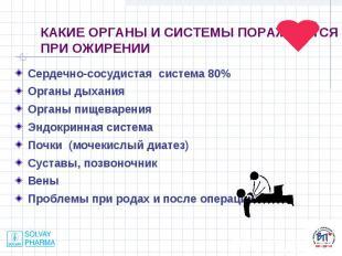 Сердечно-сосудистая система 80% Сердечно-сосудистая система 80% Органы дыхания О