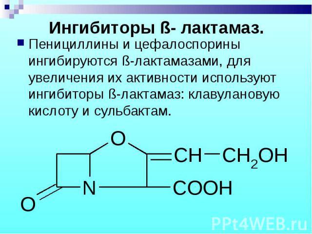 Пенициллины и цефалоспорины ингибируются ß-лактамазами, для увеличения их активности используют ингибиторы ß-лактамаз: клавулановую кислоту и сульбактам. Пенициллины и цефалоспорины ингибируются ß-лактамазами, для увеличения их активности используют…