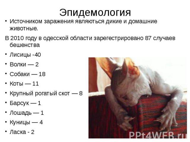 Эпидемология Источником заражения являються дикие и домашние животные. В 2010 году в одесской области зарегестрировано 87 случаев бешенства Лисицы -40 Волки — 2 Собаки — 18 Коты — 11 Крупный рогатый скот — 8 Барсук — 1 Лошадь — 1 Куницы — 4 Ласка - 2