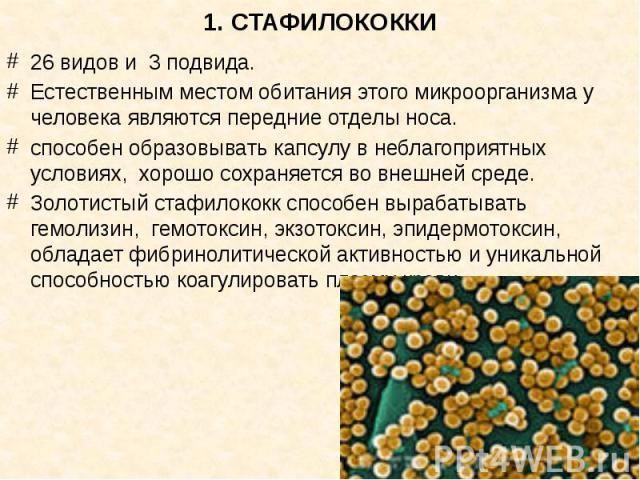 1. СТАФИЛОКОККИ 26 видов и 3 подвида. Естественным местом обитания этого микроорганизма у человека являются передние отделы носа. способен образовывать капсулу в неблагоприятных условиях, хорошо сохраняется во внешней среде. Золотистый стафилококк с…