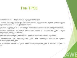 Ген TP53 Ген расположен на 17-й хромосоме, кодирует белок p53 p53 - белок, актив
