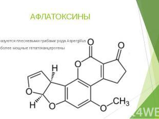 АФЛАТОКСИНЫ Образуются плесневыми грибами рода Aspergillus Наиболее мощные гепат