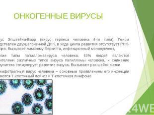 ОНКОГЕННЫЕ ВИРУСЫ Вирус Эпштейна-Барр (вирус герпеса человека 4-го типа). Геном