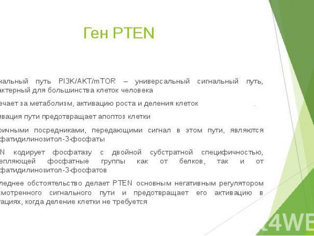 Ген PTEN Сигнальный путь PI3K/AKT/mTOR – универсальный сигнальный путь, характерный для большинства клеток человека Отвечает за метаболизм, активацию роста и деления клеток Активация пути предотвращает апоптоз клетки Вторичными посредниками, передаю…
