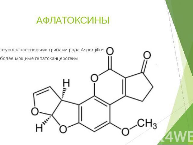АФЛАТОКСИНЫ Образуются плесневыми грибами рода Aspergillus Наиболее мощные гепатоканцерогены