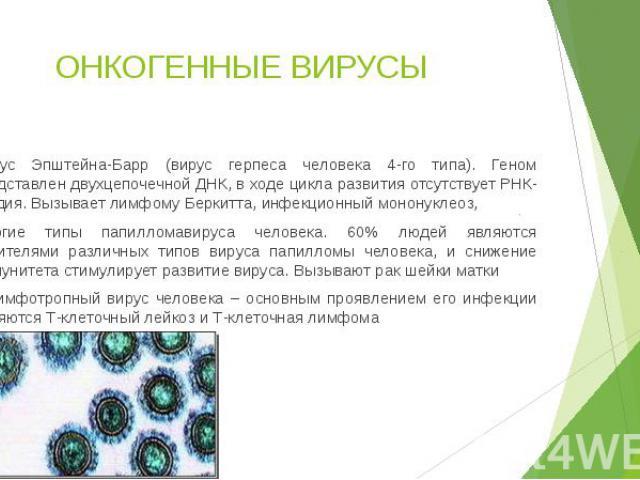 ОНКОГЕННЫЕ ВИРУСЫ Вирус Эпштейна-Барр (вирус герпеса человека 4-го типа). Геном представлен двухцепочечной ДНК, в ходе цикла развития отсутствует РНК-стадия. Вызывает лимфому Беркитта, инфекционный мононуклеоз, Многие типы папилломавируса человека. …