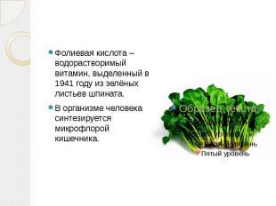 Фолиевая кислота – водорастворимый витамин, выделенный в 1941 году из зелёных ли