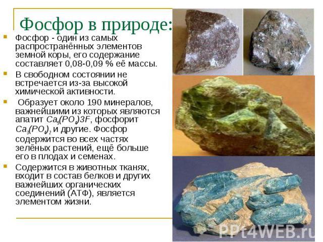 Фосфор - один из самых распространённых элементов земной коры, его содержание составляет 0,08-0,09 % её массы. Фосфор - один из самых распространённых элементов земной коры, его содержание составляет 0,08-0,09 % её массы. В свободном состоянии не вс…