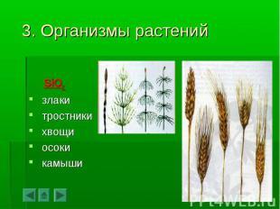 SiO2 злаки тростники хвощи осоки камыши