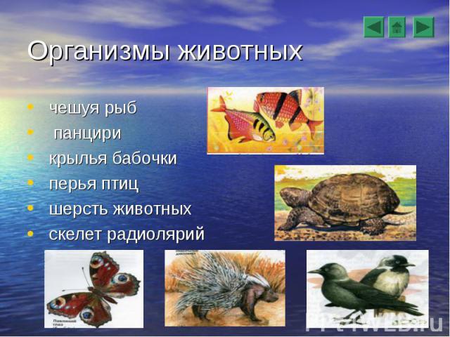 чешуя рыб чешуя рыб панцири крылья бабочки перья птиц шерсть животных скелет радиолярий