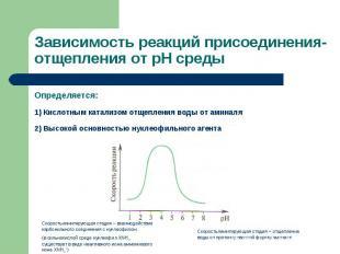 Определяется: Определяется: 1) Кислотным катализом отщепления воды от аминаля 2)