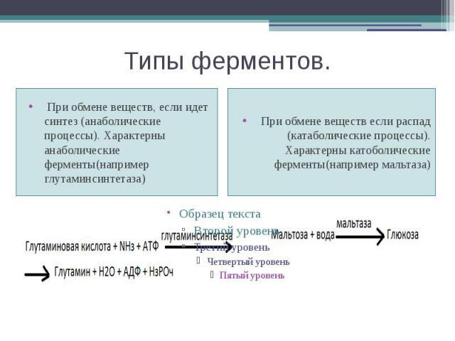 Типы ферментов. При обмене веществ, если идет синтез (анаболические процессы). Характерны анаболические ферменты(например глутаминсинтетаза)