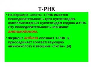 Т-РНК На вершине «листа» т-РНК имеется последовательность трех нуклеотидов, комп