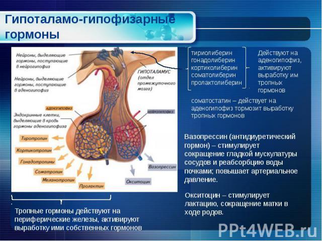 Гипоталамо-гипофизарные гормоны