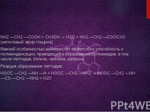 NH2 —CH2 —COOH + CH3OH → H2O + NH2 —CH2 —COOCH3 (метиловый эфир глицина) Важной