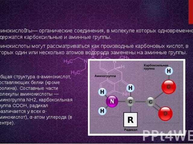 Аминокисло ты— органические соединения, в молекуле которых одновременно содержатся карбоксильные и аминные группы. Аминокисло ты— органические соединения, в молекуле которых одновременно содержатся карбоксильные и аминные группы. Аминокислоты могут …