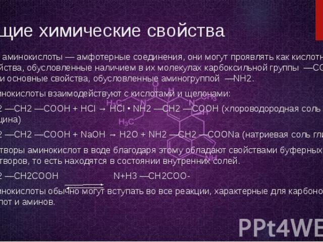 Общие химические свойства Все аминокислоты — амфотерные соединения, они могут проявлять как кислотные свойства, обусловленные наличием в их молекулах карбоксильной группы —COOH, так и основные свойства, обусловленные аминогруппой —NH2. Аминокислоты …