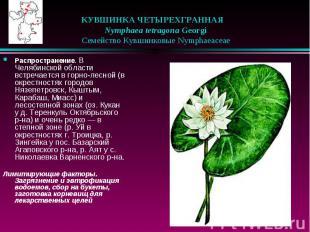 КУВШИНКА ЧЕТЫРЕХГРАННАЯ  Nymphaea tetragona Georgi  Семе