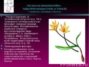 ТЮЛЬПАН БИБЕРШТЕЙНА  Tulipa biebersteiniana Schult. et Schult.fil. &