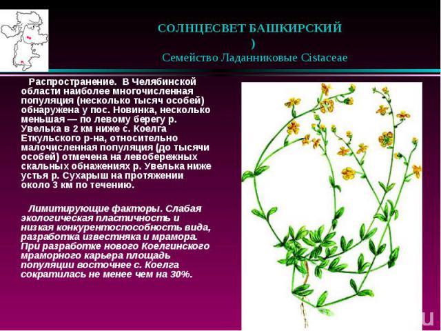 СОЛНЦЕСВЕТ БАШКИРСКИЙ )  Семейство Ладанниковые Cistaceae Распространение. В Челябинской области наиболее многочисленная популяция (несколько тысяч особей) обнаружена у пос. Новинка, несколько меньшая — по левому берегу р. Ув…