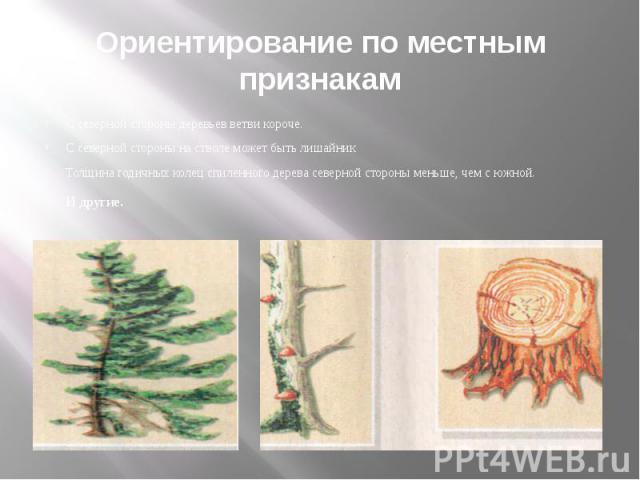 Ориентирование по местным признакам С северной стороны деревьев ветви короче. С северной стороны на стволе может быть лишайник Толщина годичных колец спиленного дерева северной стороны меньше, чем с южной. И другие.