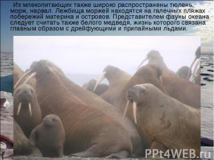 Из млекопитающих также широко распространены тюлень, морж, нарвал. Лежбища морже