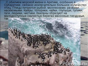 С обилием морской жизни в Арктике, особенно в Субарктике, связано исключительно