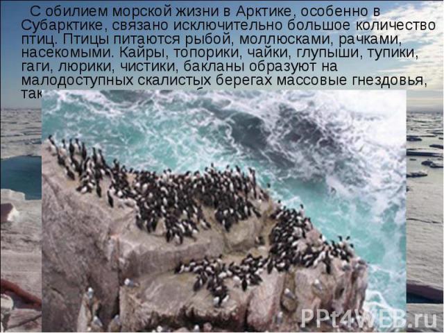 С обилием морской жизни в Арктике, особенно в Субарктике, связано исключительно большое количество птиц. Птицы питаются рыбой, моллюсками, рачками, насекомыми. Кайры, топорики, чайки, глупыши, тупики, гаги, люрики, чистики, бакланы образуют на малод…