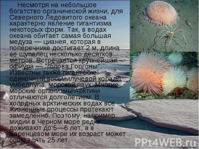Несмотря на небольшое богатство органической жизни, для Северного Ледовитого океана характерно явление гигантизма некоторых форм. Так, в водах океана обитает самая большая медуза — цианея, которая в поперечнике достигает 2 м, длина ее щупалец нескол…