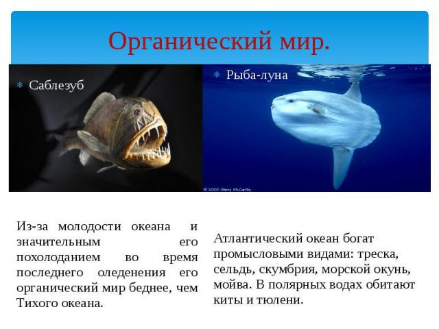 Органический мир. Саблезуб Из-за молодости океана и значительным его похолоданием во время последнего оледенения его органический мир беднее, чем Тихого океана.