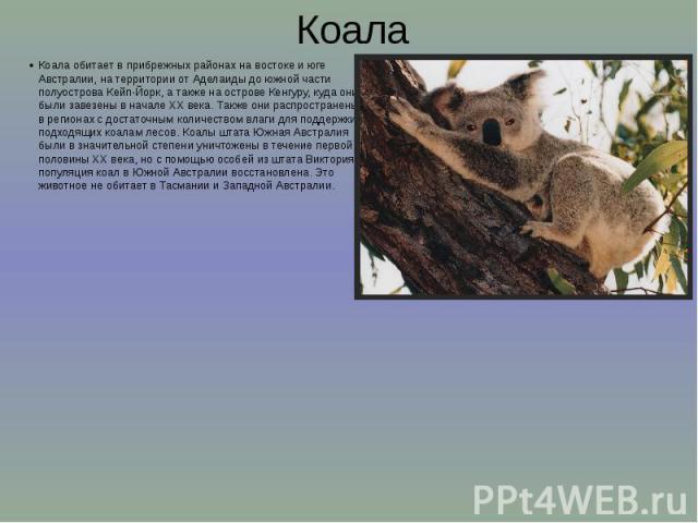 Коала Коала обитает в прибрежных районах на востоке и юге Австралии, на территории от Аделаиды до южной части полуострова Кейп-Йорк, а также на острове Кенгуру, куда они были завезены в начале XX века. Также они распространены в регионах с достаточн…