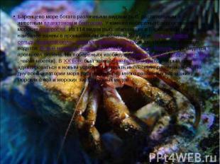 Баренцево море богато различными видами рыб, растительным и животным планктоном