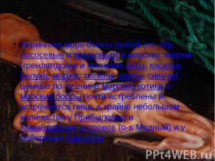 Берингово море богато рыбой (гл. обр. лососевые и тресковые) и морских зверем (г