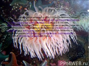 Растительный мир моря включает в себя 270 видов многоклеточных зелёных, бурых, к