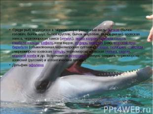 Среди рыб, водящихся в Чёрном море: различные виды бычков (бычок-головач, бычок-