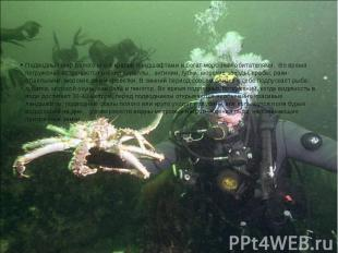 Подводный мир Белого моря красив ландшафтами и богат морскими обитателями.