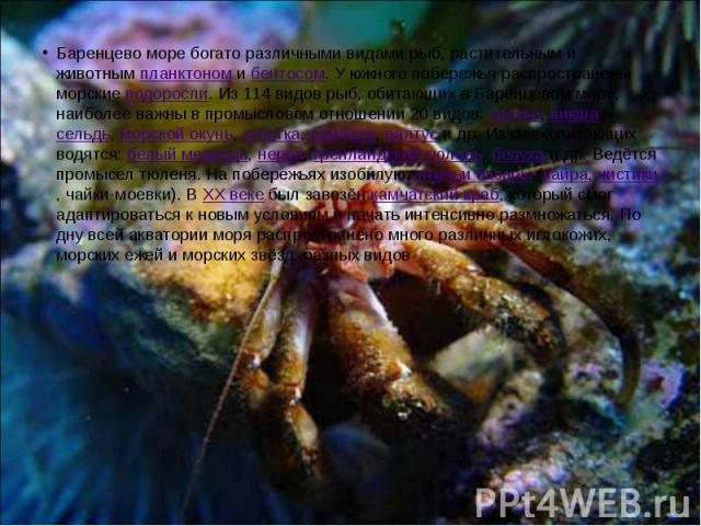 Баренцево море богато различными видами рыб, растительным и животным планктоном и бентосом. У южного побережья распространены морские водоросли. Из 114 видов рыб, обитающих в Баренцевом море, наиболее важны в промысловом отношении 20 видов: треска, …