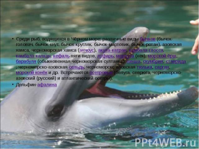 Среди рыб, водящихся в Чёрном море: различные виды бычков (бычок-головач, бычок-кнут, бычок-кругляк, бычок-мартовик, бычок-ротан), азовская хамса, черноморская хамса (анчоус), акула-катран, камбала-глосса, камбала-калкан, кефаль пяти видов, луфарь, …