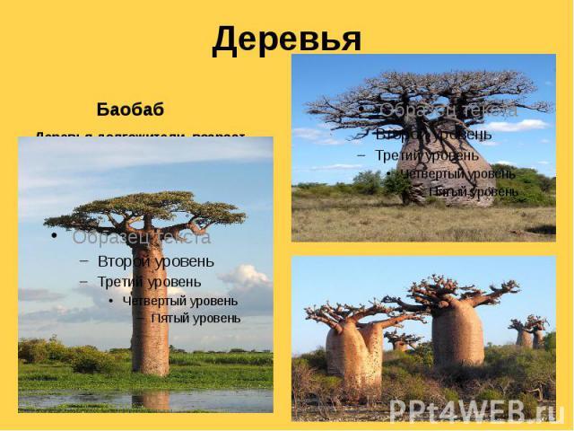 Деревья Баобаб Деревья-долгожители, возраст некоторых достигает 4-6 тыс. лет