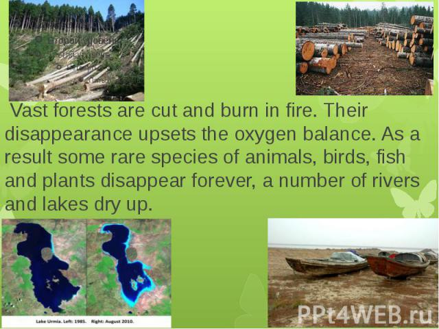 Vast forests are cut and burn in fire. Their disappearance upsets the oxygen balance. As a result some rare species of animals, birds, fish and plants disappear forever, a number of rivers and lakes dry up.
