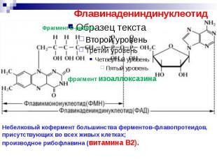 Флавинадениндинуклеотид