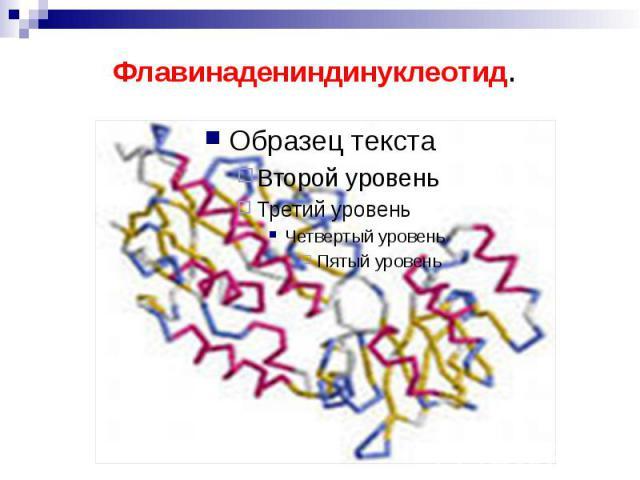 Флавинадениндинуклеотид.