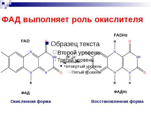 ФАД выполняет роль окислителя