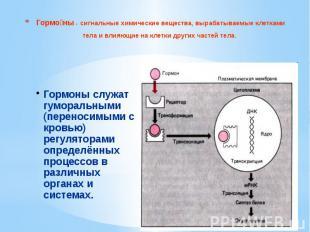 Гормо ны - сигнальные химические вещества, вырабатываемые клетками тела и влияющ